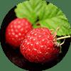 chiringuito-dessert-fruit-rouge
